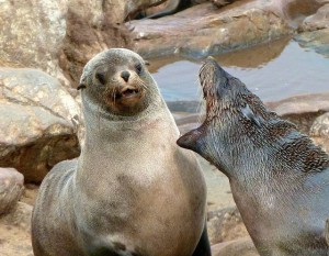 seal with bad breath